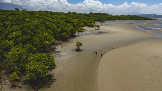 If you've got mangroves around, you'll never go hungry.