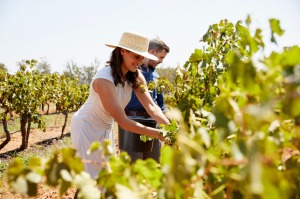 The Hunter Valley is world-renowned for wineries.