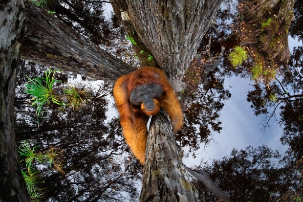 """'The world is going upside down' by Thomas Vijayan, Category Winner & Overall Winner """"After spending few days in Borneo, ..."""