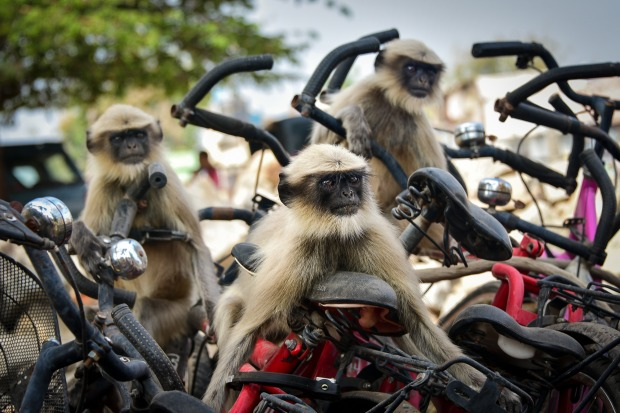 """'The Race': Yevhen Samuchenko  """"My friends and I walked in the centre of the small town of Hampi in India. There was a ..."""