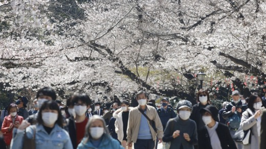 Book accommodation well in advance for the famous cherry blossom season in Japan.