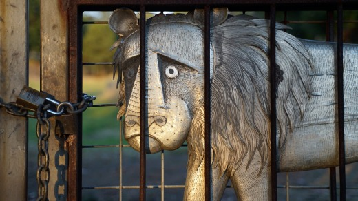 The dead-eyed lion fixates on the shiny padlock that secures the chain that strangles his liberty.