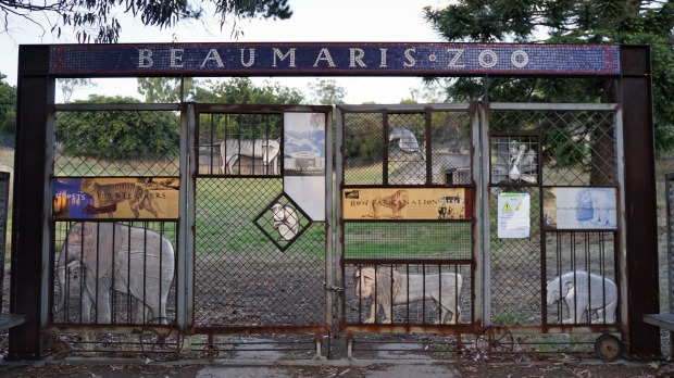 """The metal sculptures entrapped on a gate that proclaims """"Beaumaris Zoo"""" in retro mosaic could be obtusely provocative ..."""