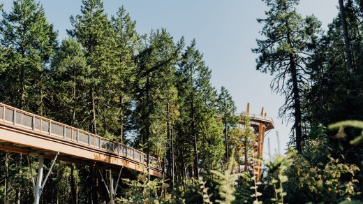 The 600-metre elevated walkway passes through Arbutus and Douglas Fir forest.