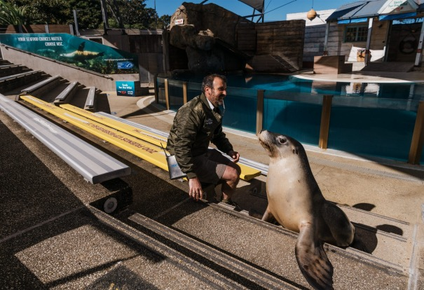 Marine mammal keeper Jose Altuna with Moby, an Australian Sea Lion. Whilst Greater Sydney remains in lockdown, Taronga ...