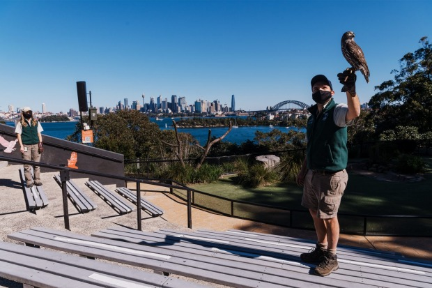Free Flight bird keepers, Jaqueline King and Brendan Host with Ripley, barking owl. Whilst Greater Sydney remains in ...