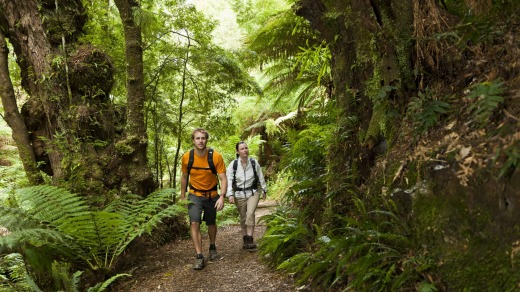 Walking in Melba Gully Rainforest in the Great Otway National Park.
