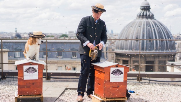 Honey production on the rooftop of the Mandarin Oriental, Paris.