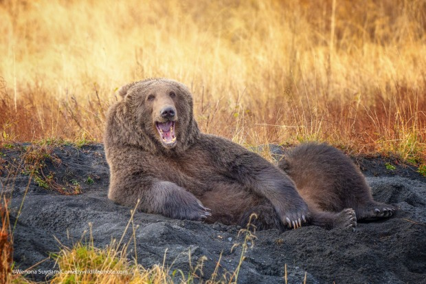 Draw me like one of your French Bears.