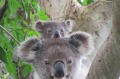 See the wildlife of Byron Bay from the comfort of your own home.