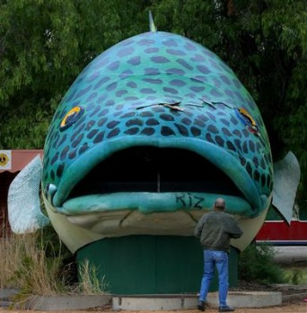The Big Murray Cod, at Swan Hill Victoria.