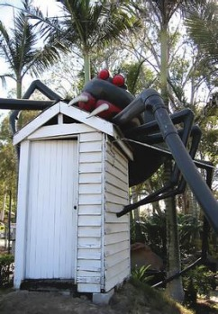 The Big Redback Spider at Eight Mile Plains in Brisbane.