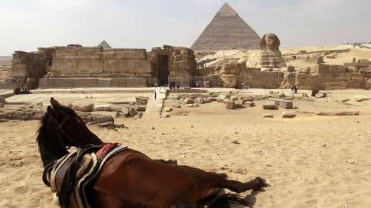 A horse rests near the pyramids in Giza:  Animal rights groups are feeding starving animals that used to pull tourists ...