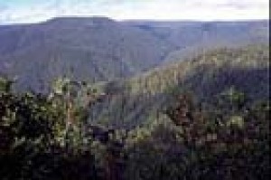 View of the Devils Hole from lookout at Barrington Tops National Park