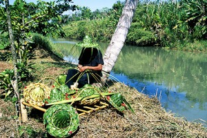 Nature at work ... making hats beside the Tortuguero Canal.