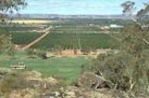 The vineyards from the lookouts above the town