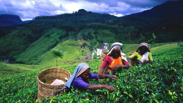10. HILL COUNTRY, SRI LANKA. Hover above south-central Sri Lanka and all you'll see is green. The cool highlands have been blanketed by tea plantations since the late 19th century - with just splashes of rainbow-sari-clad pickers disrupting the color scheme.