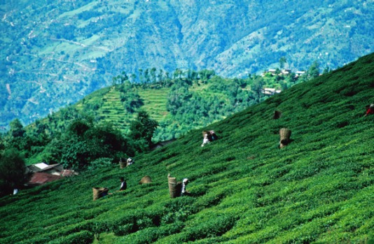 9. DARJEELING, INDIA. Here you're surrounded by the stuff: tea in the cafes, tea in the bazaars and a deep-green leafy ...