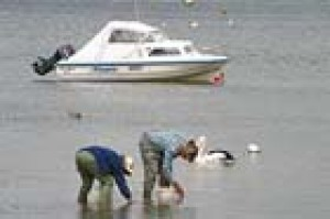 Anglers search for bait on the edge of Wilsons Promontory N.P.