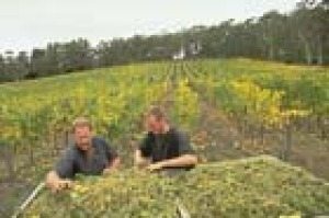 Picking grapes in the Adelaide Hills (pic: S.A. Tourism Commission)