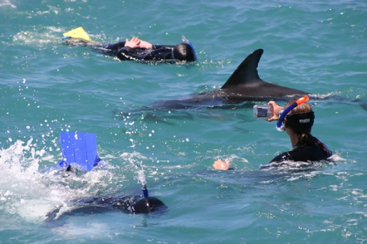 10. SWIMMING WITH DOLPHINS, NEW ZEALAND. These graceful and playful creatures are guaranteed to quicken the pulse of ...
