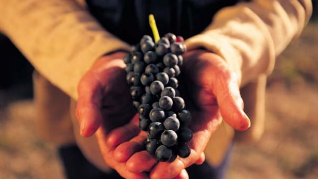 Seed assets ... grapes are harvested in the Barossa Valley.