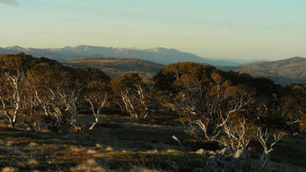 Ghostly forests ... snow on faraway peaks.