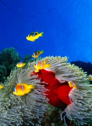 Surprising ... beneath the surface of the Red Sea.