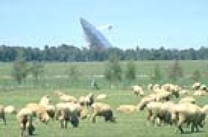 Sheep graze near the Parkes Radio Telescope
