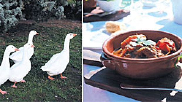 Worth their weight ... (from left) Cellar & Stores' beef provencal; geese at Bress.