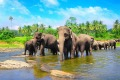 Sri Lanka, elephants